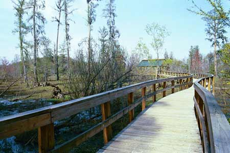 Phinizy Swamp Boardwalk