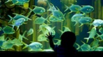 Newport Aquarium Package