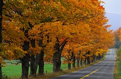 Trees with bright orange leaves lining a country road