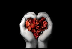 Two hands forming a heart shape holding red rose petals