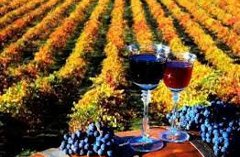 Two glasses of wine surrounded by grapes