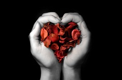 Hands in the shape of a heart holding red rose petals