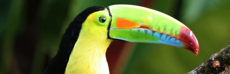 Brightly colored toucan