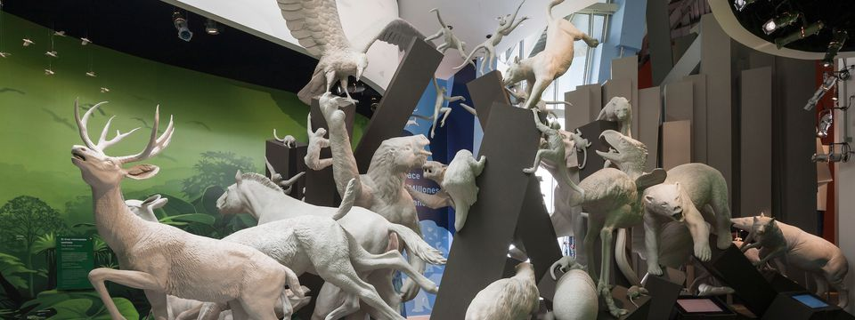 Animal sculpture display at the Biodiversity Museum
