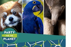 Party for the Planet image with a red panda, a blue parrot and an anteater